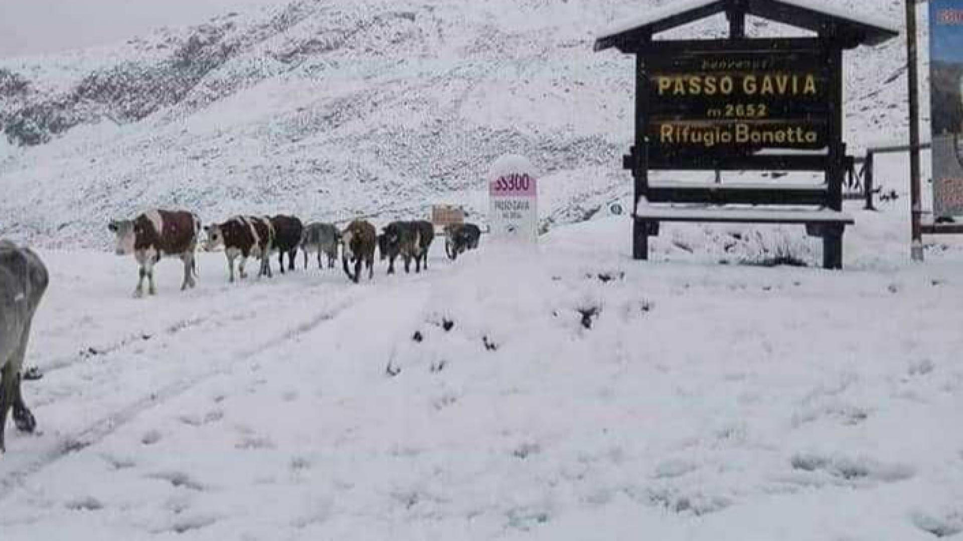 Сняг падна в Италия и Швейцария