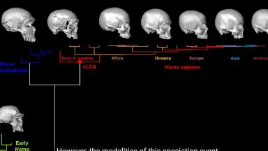 Възпроизведоха виртуално общия предшественик на Хомо сапиенс (видео)