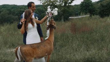 Елен се самопокани на сватба и изяде букета на булката