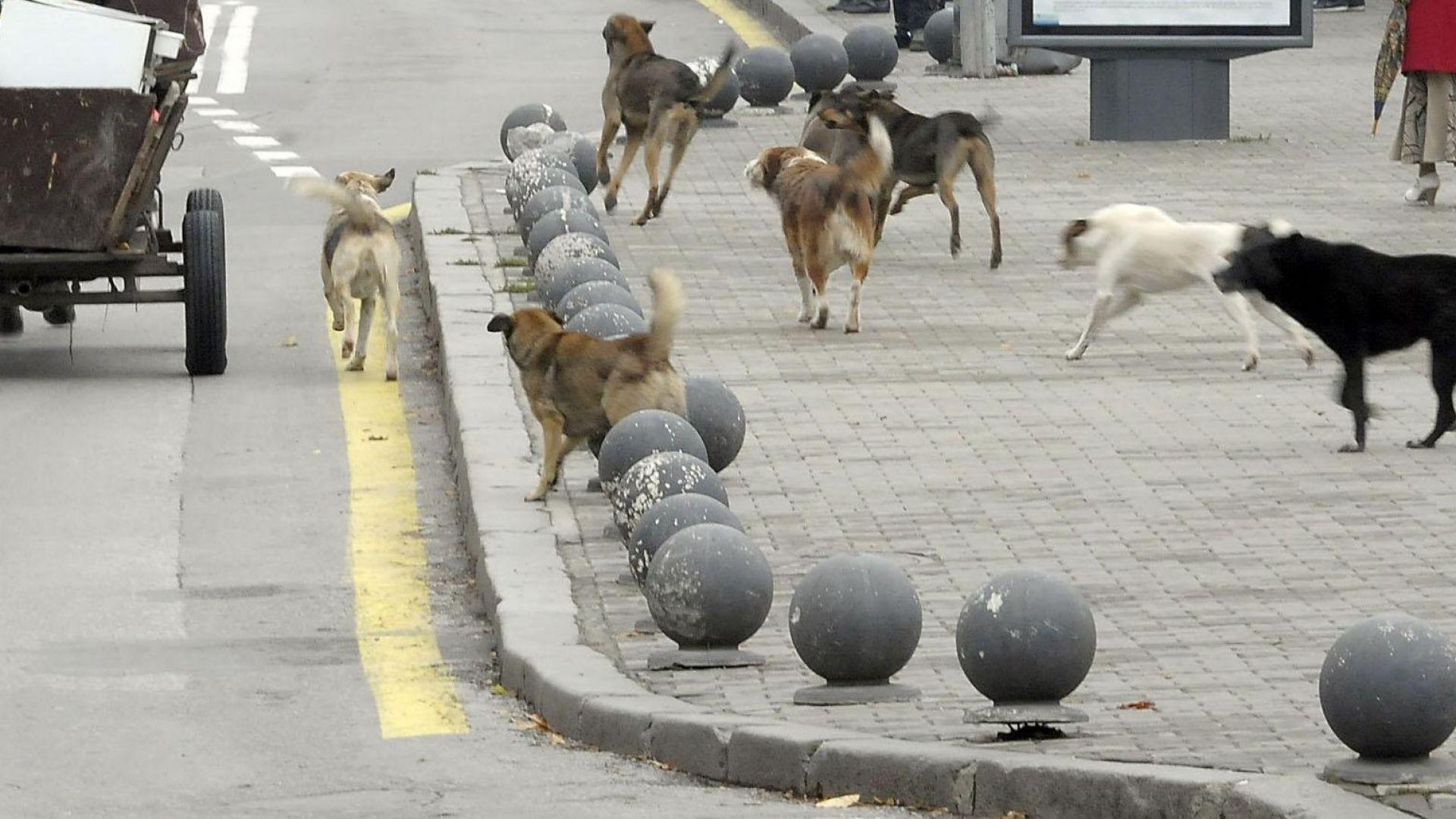 Март 2005 г. - Обичайна по това време гледка в центъра на града - глутница кучета преследват каруца