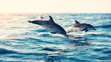 """Делфините в Ламанша са с """"токсичен коктейл"""" от химикали"""
