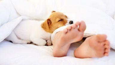 Спането с куче е полезно