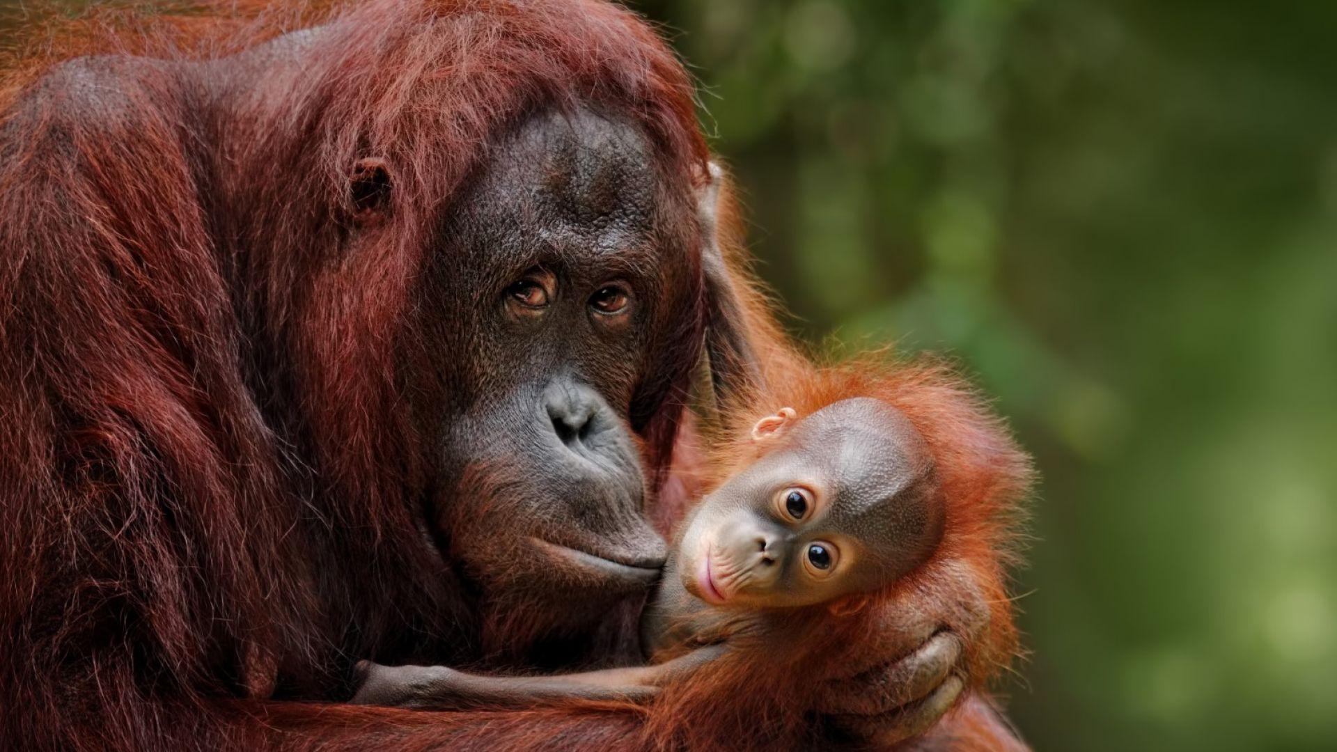 Планетата остава без джунгли: гори остров Калимантан (Борнео) - галерия