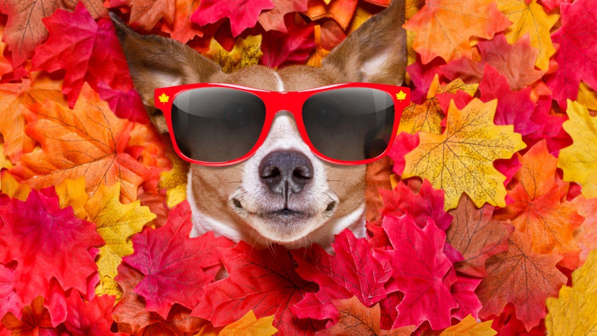 Изминалият октомври - пореден най-топъл в историята
