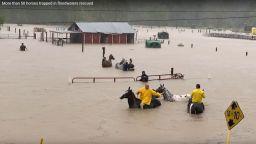 Десетки коне спасени от Имелда в Тексас (видео)