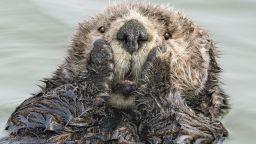 Комедийни снимки в дивата природа - Comedy Wildlife Photography Awards избра снимките-финалисти