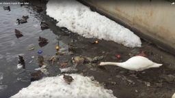 Сърцераздирателно видео: лебед чисти водата от пластмасови боклуци