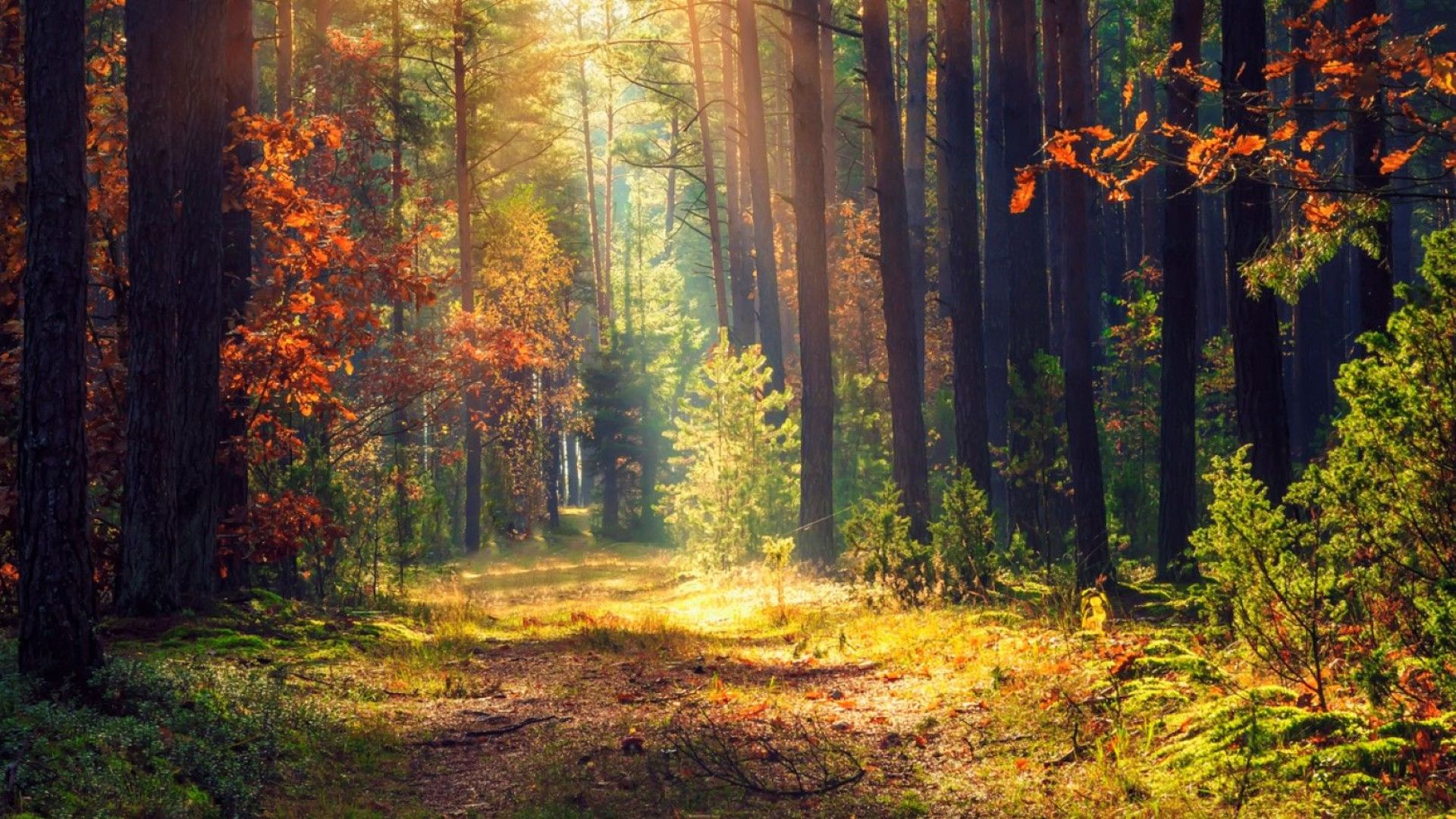 Държавата заделя 1 млн. лева за изкупуване на частни гори