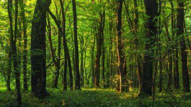 Държавата задели 1 млн. лева за изкупуване на частни гори