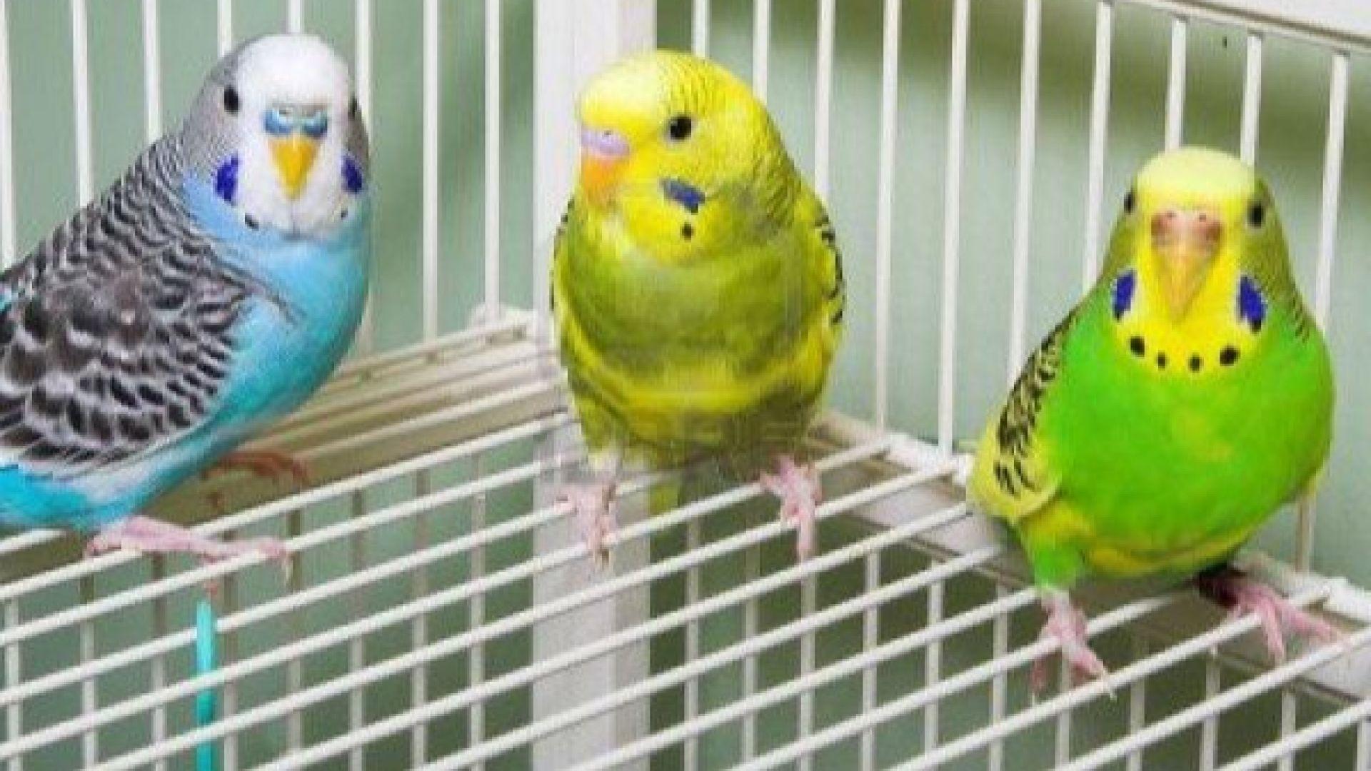 В Турция заловиха пратка с 45 папагалчета от България