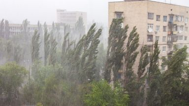 Десетки сигнали за паднали клони и разрушени покриви в София след бурята