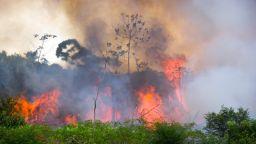 Всяка година в света се изсичат гори, колкото е площта на Великобритания