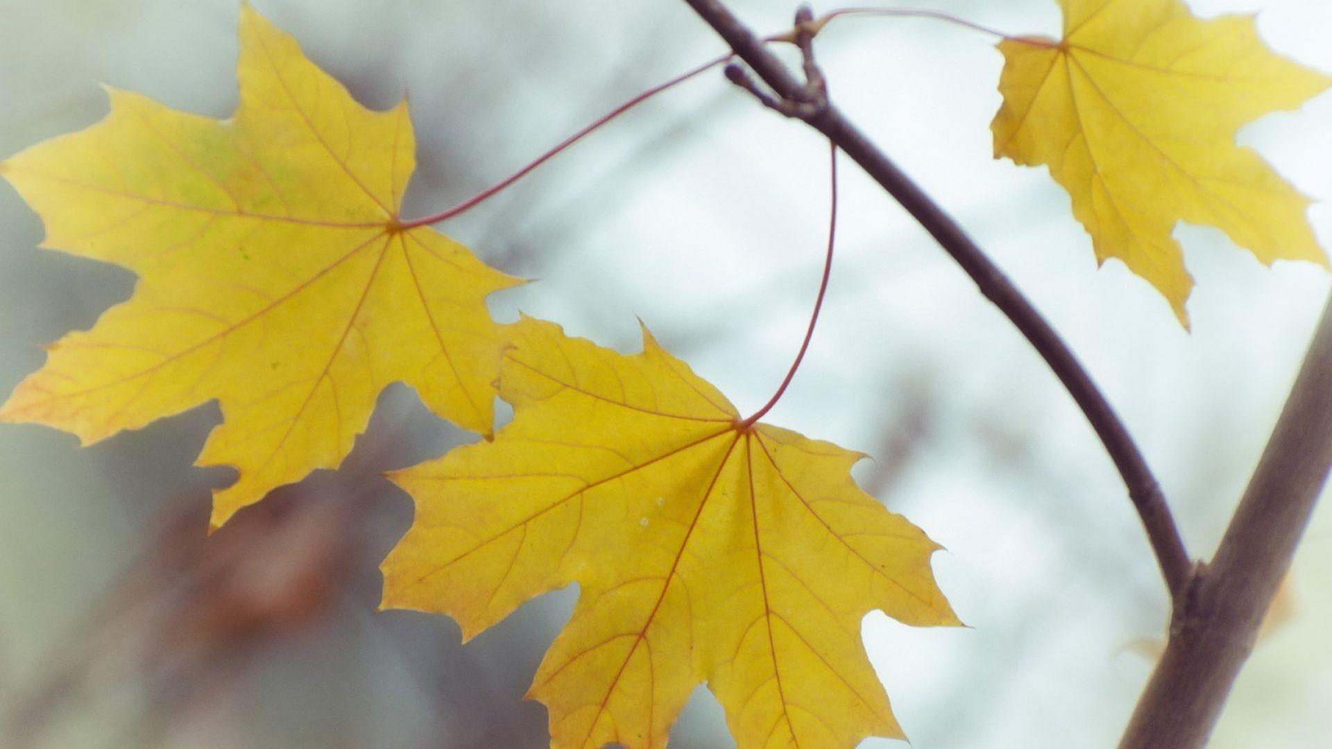 Ноември продължава с необичайно топло време - до 25 градуса