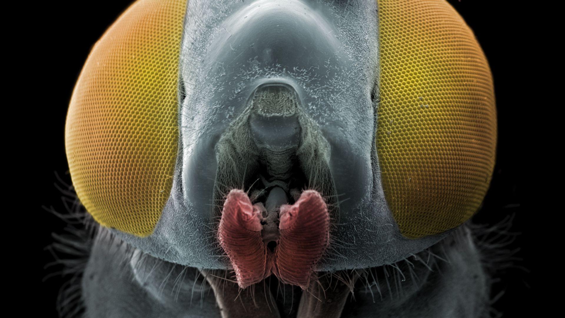 Ежедневието ни през електронен микроскоп (снимки)