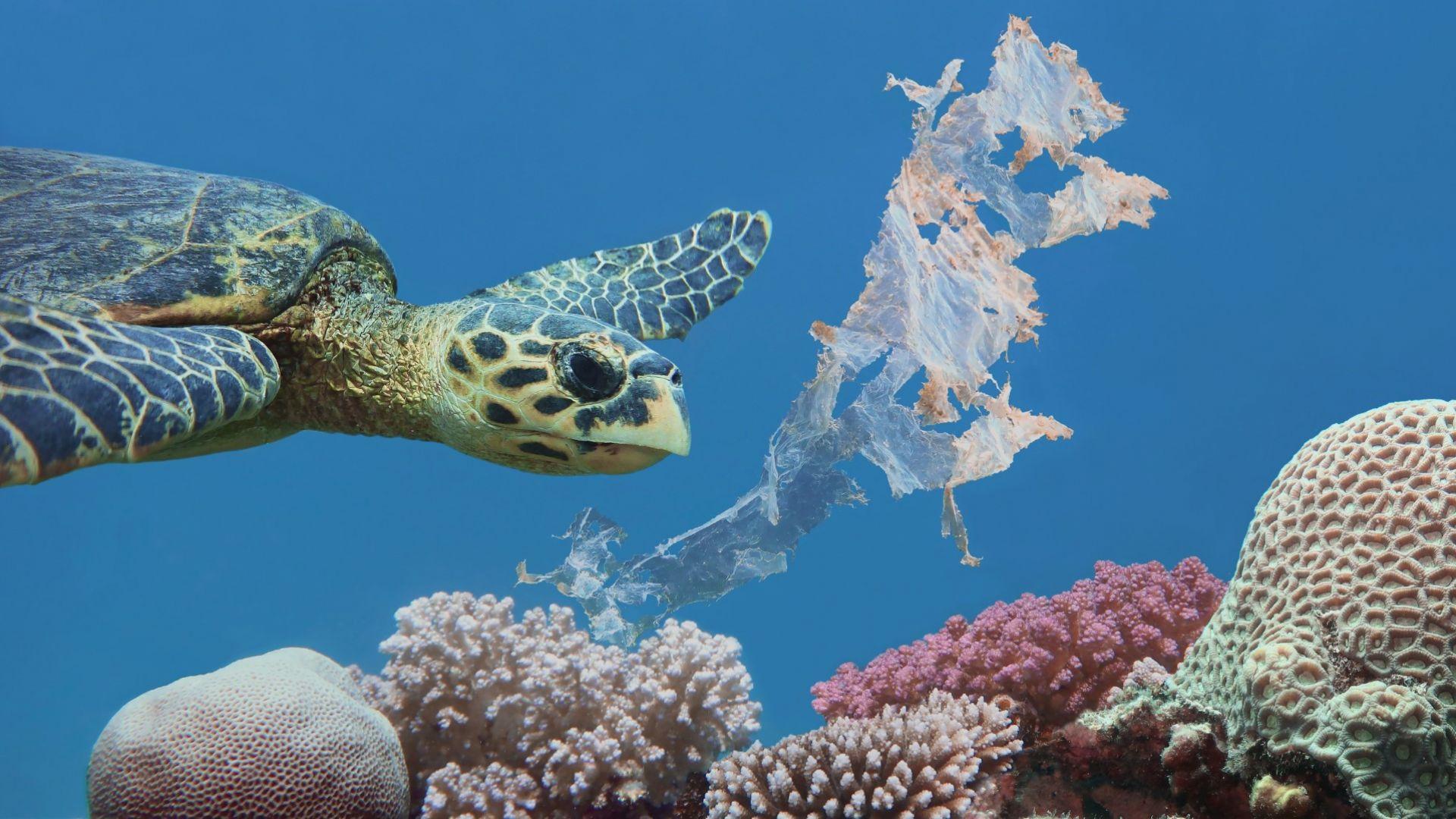 Повечето пластмасови отпадъци  в океаните се озовават близо до бреговете