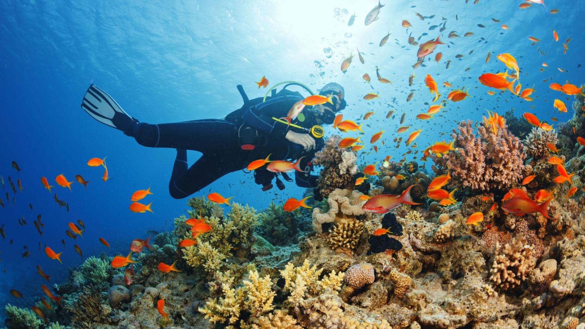 Корали, смятани за изчезнали, се появиха в Средиземно море