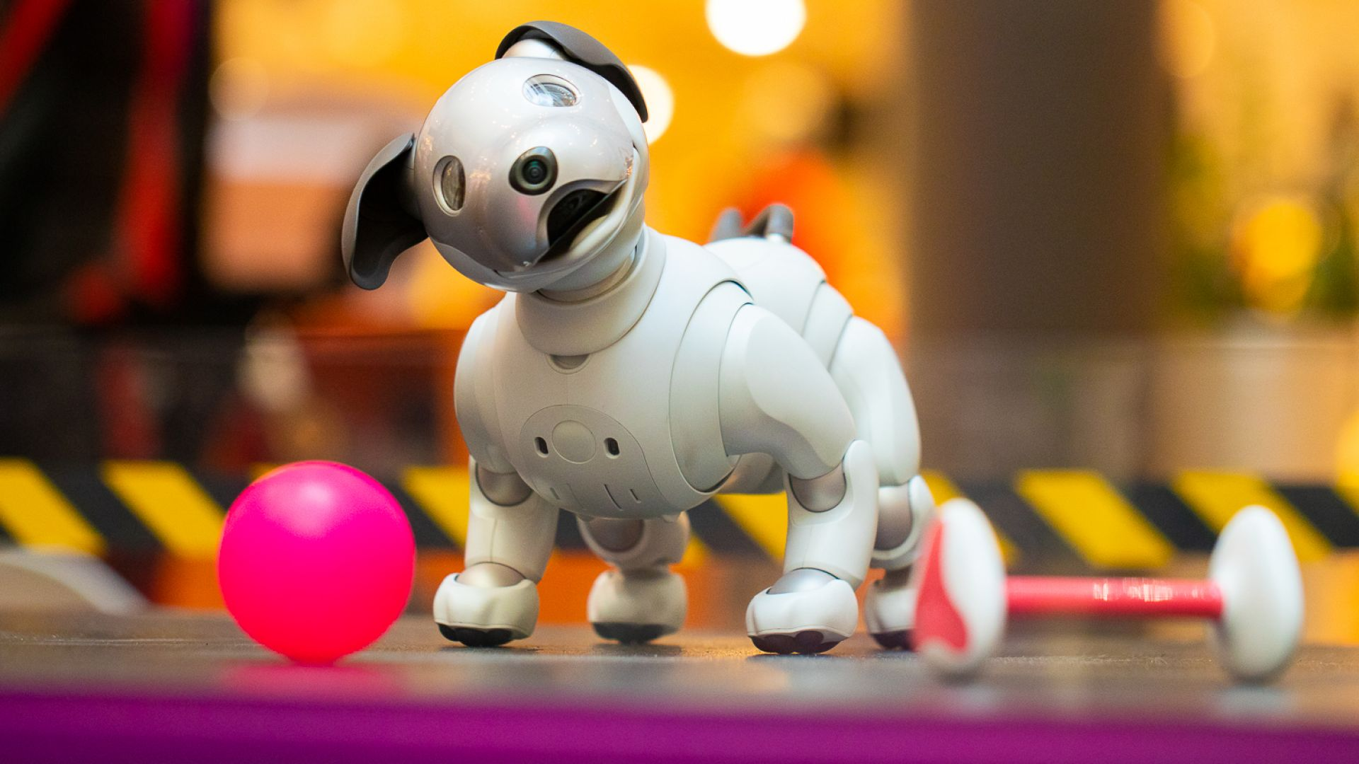 Кеймбридж: Кучета-роботи ни спасят от самотата по време на пандемията