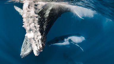 """Камера-""""ловец"""" на китове"""