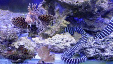 Показват най-отровните риби в света (снимки)