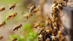 ЕС забрани четвърти пестицид заради опасност за пчелите и хората