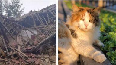 Котки спасиха стопаните си от свлачище
