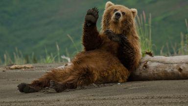 В зоопарка в Кишинев заради топлата зима мечките не могат да заспят
