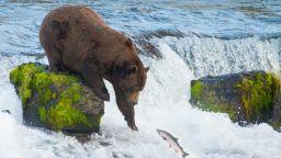 Фауната и флората са застрашени от климатичните промени