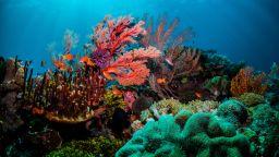 Половината от коралите на острови в Големия бариерен риф вече ги няма (видео)