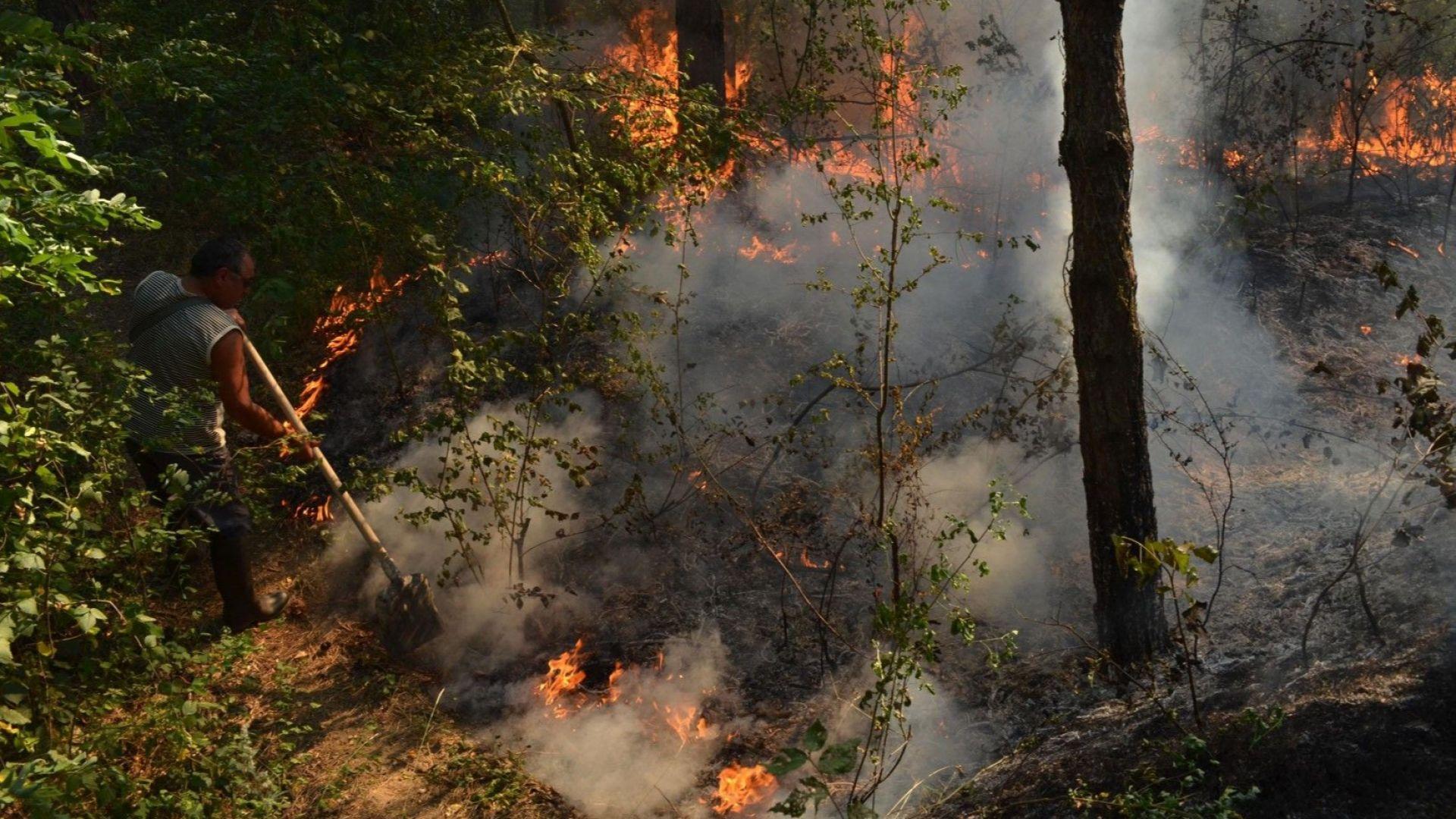 Български и сръбски пожарникари се борят с големия пожар над Чипровци