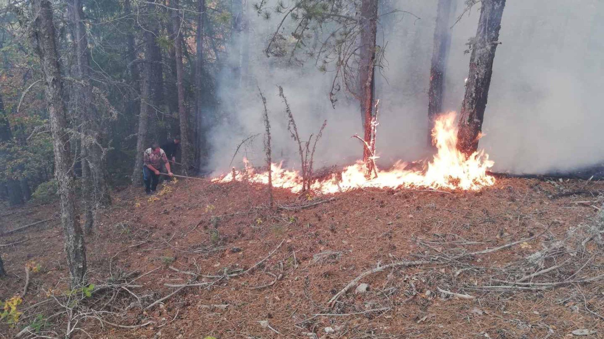 Пожар гори в района на село Плана