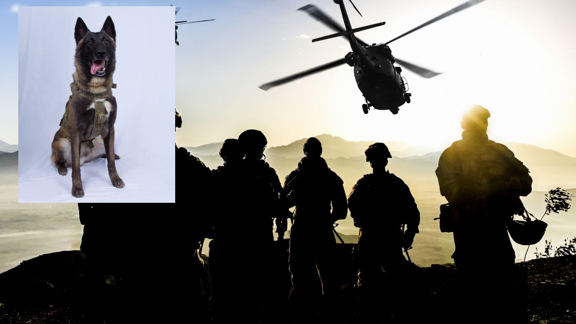 Тръмп иска да награди с орден кучето, участвало в операцията срещу Ал-Багдади