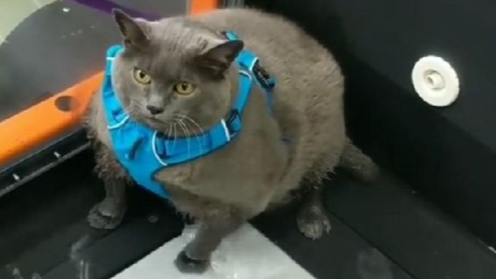 Дебелата котка Синдърблок e истинска сензация в интернет