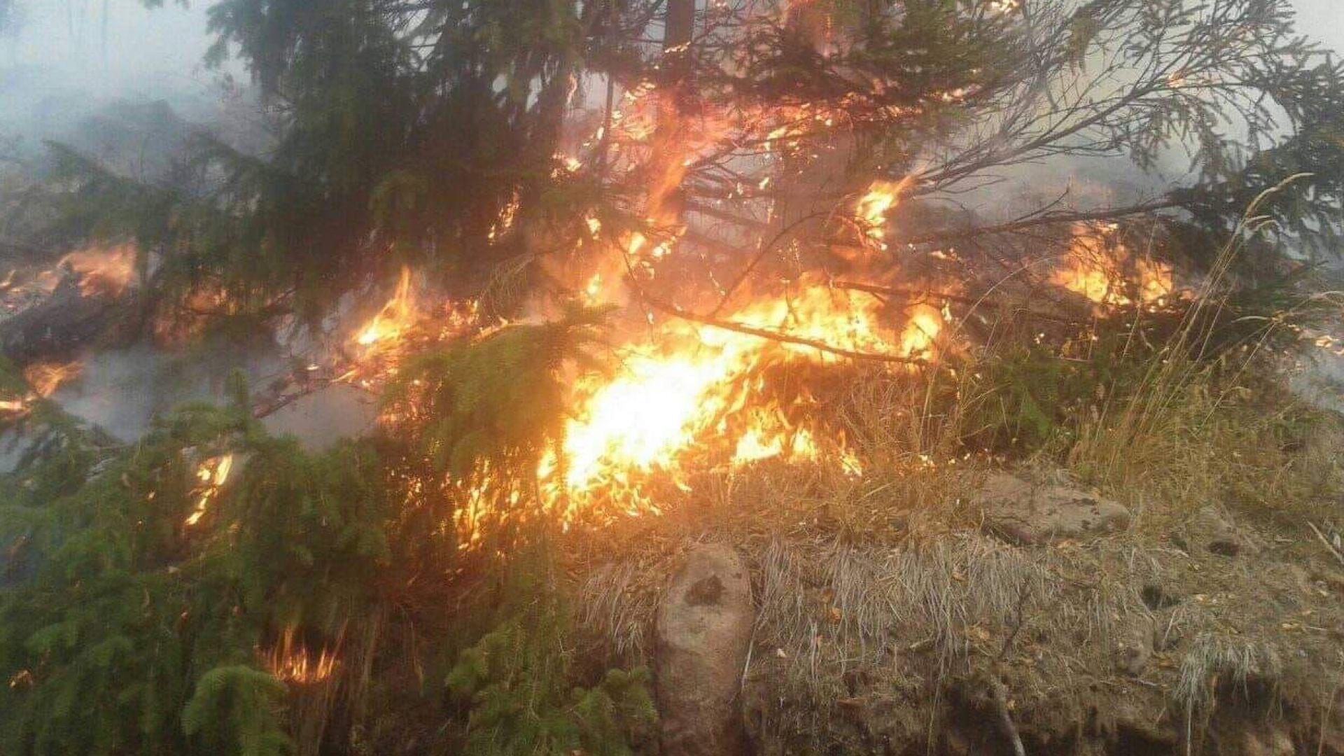 Огненият ад обхвана над 40 000 декара от Стара планина (видео)