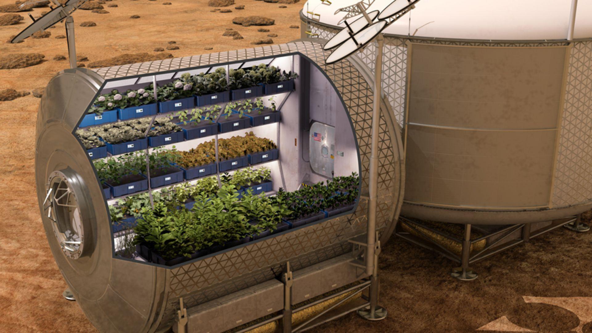 Чехи подготвят растения за Марс