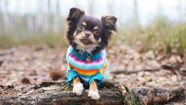 Зимна мода: да обличаме ли дрехи на кучетата си в студеното време?