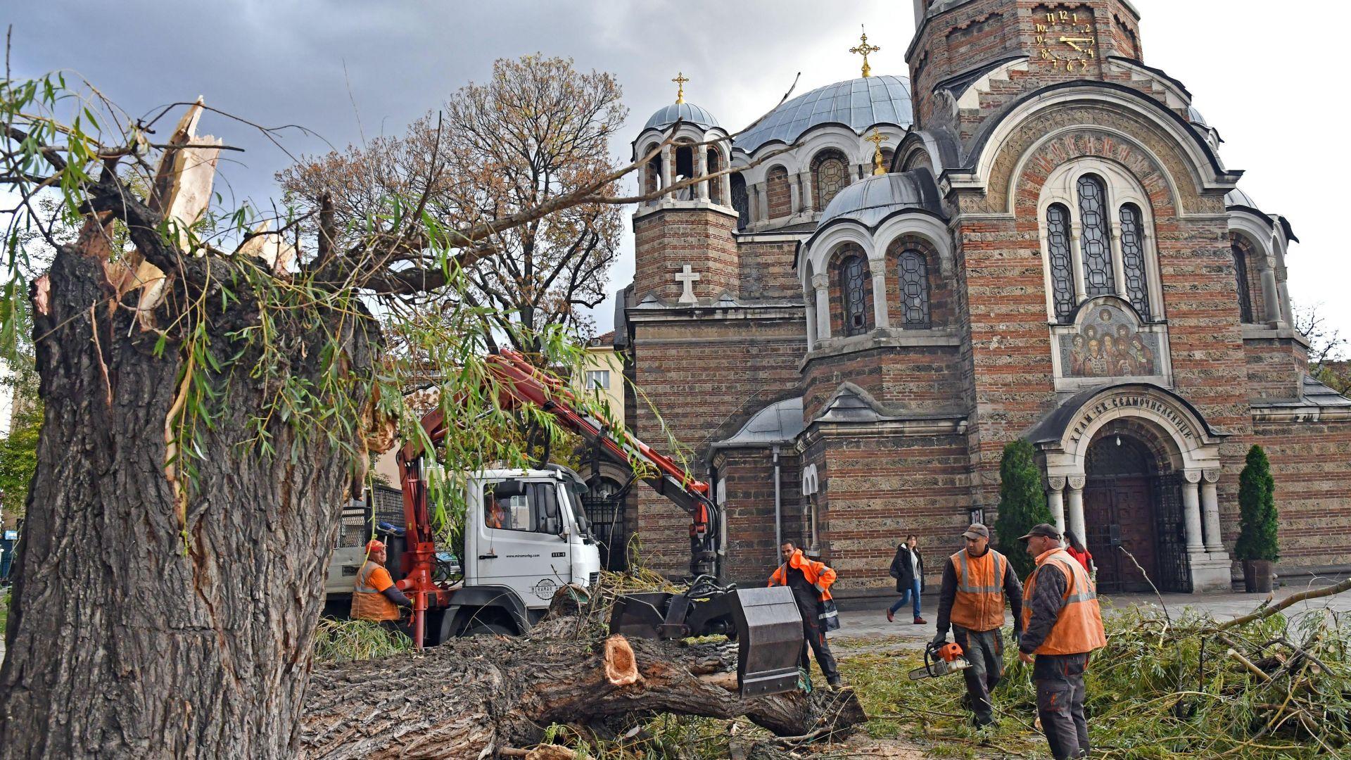 """Силен вятър събори една от върбите пред църквата """"Св. Седмочисленици"""", била изгнила (снимки)"""