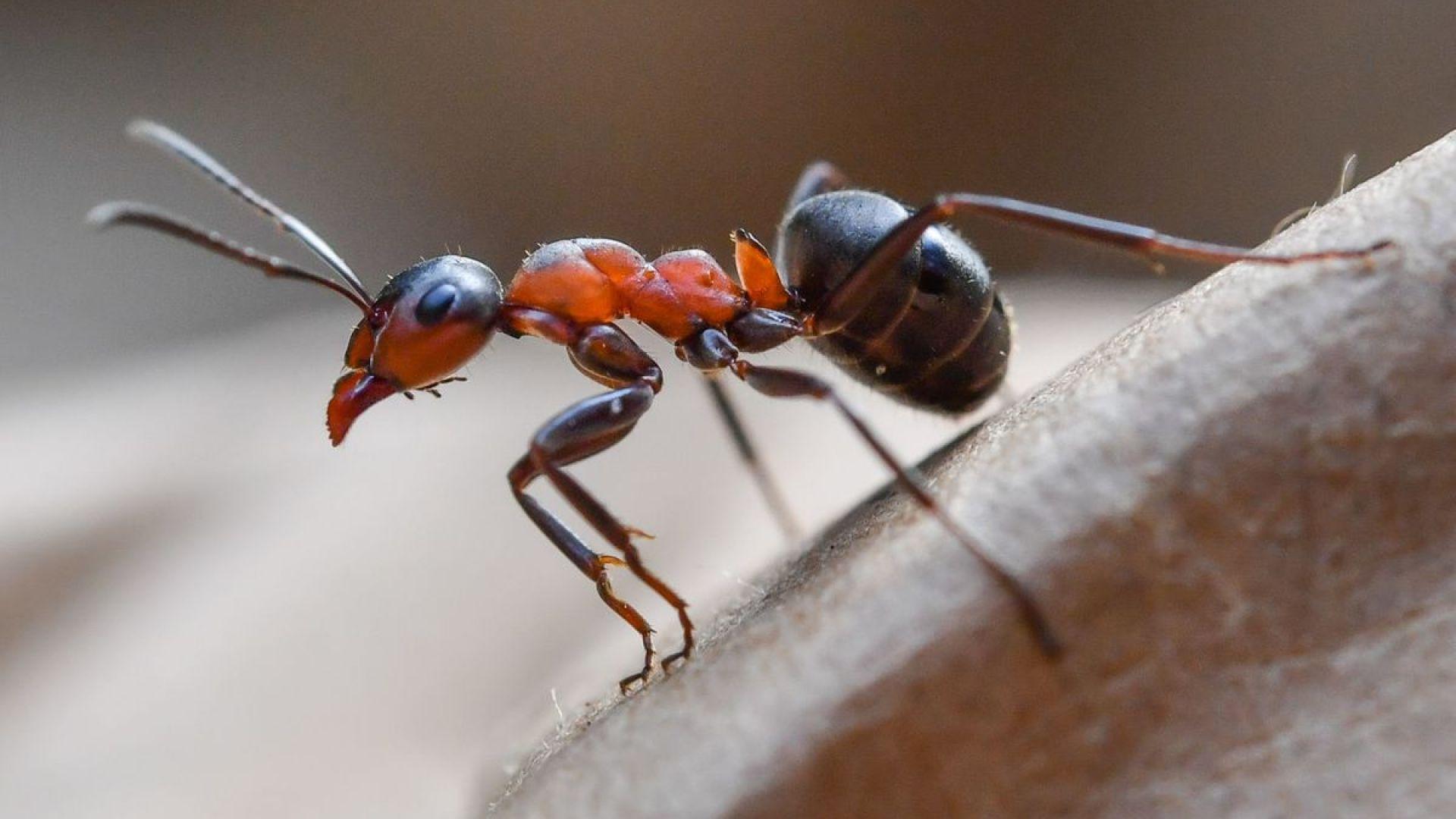 Милиони мравки канибали изпълзяха от съветски ядрен бункер