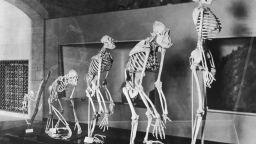 Българи в екипа от учени, открил човешки прародител в Европа