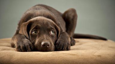 Наказанията и виковете могат да травматизират кучетата