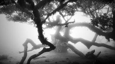 Дървета столетници, събрали мъдростта на човечеството