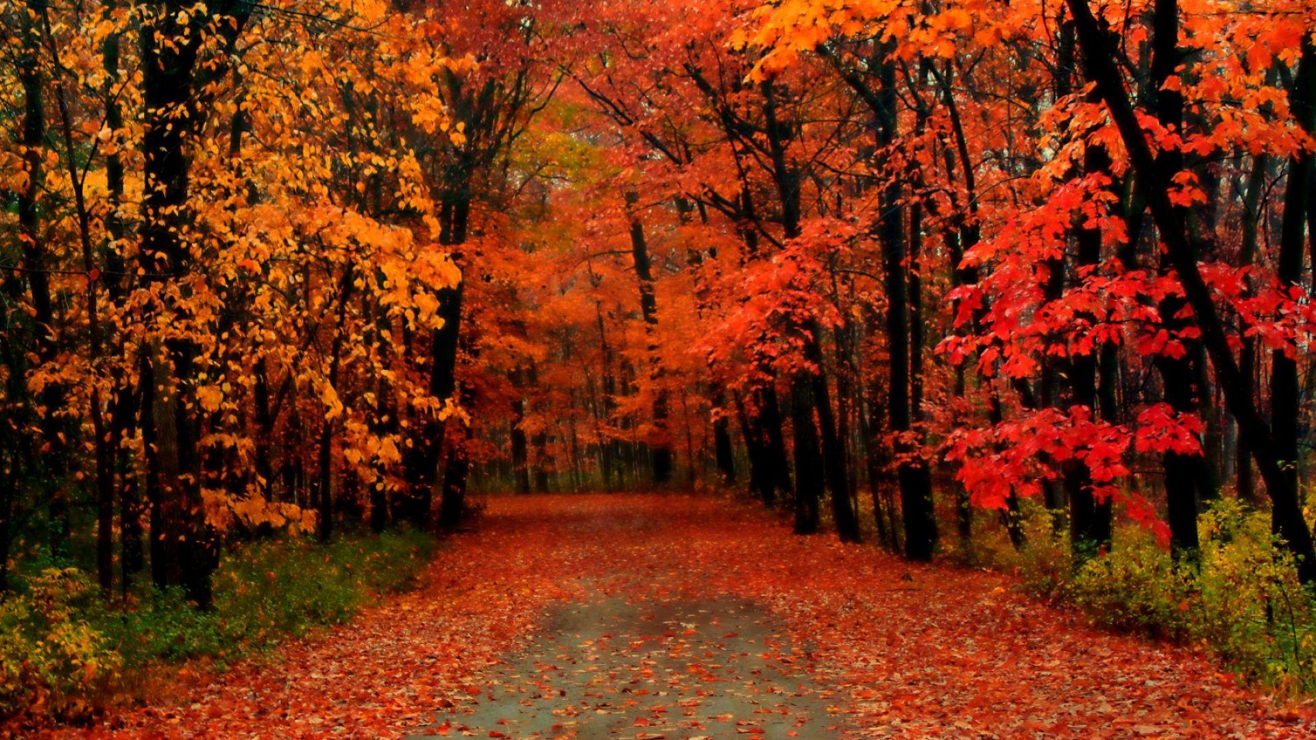 Климатичните промени се отразяват и на есенния листопад