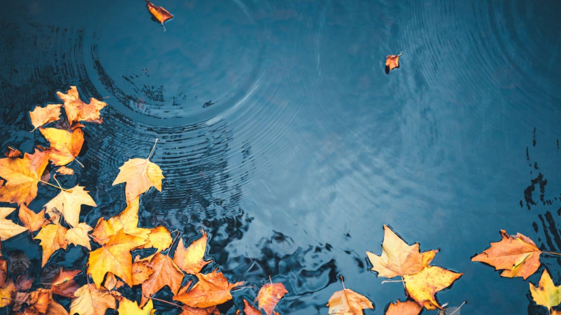 Облачно и хладно ноемврийско време в следващите дни