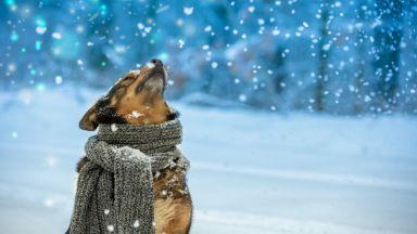 Зимата ще бъде много мека, уникално единодушие в прогнозите на моделите