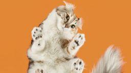 Ето как изглеждат любопитни котки, погледнати отдолу