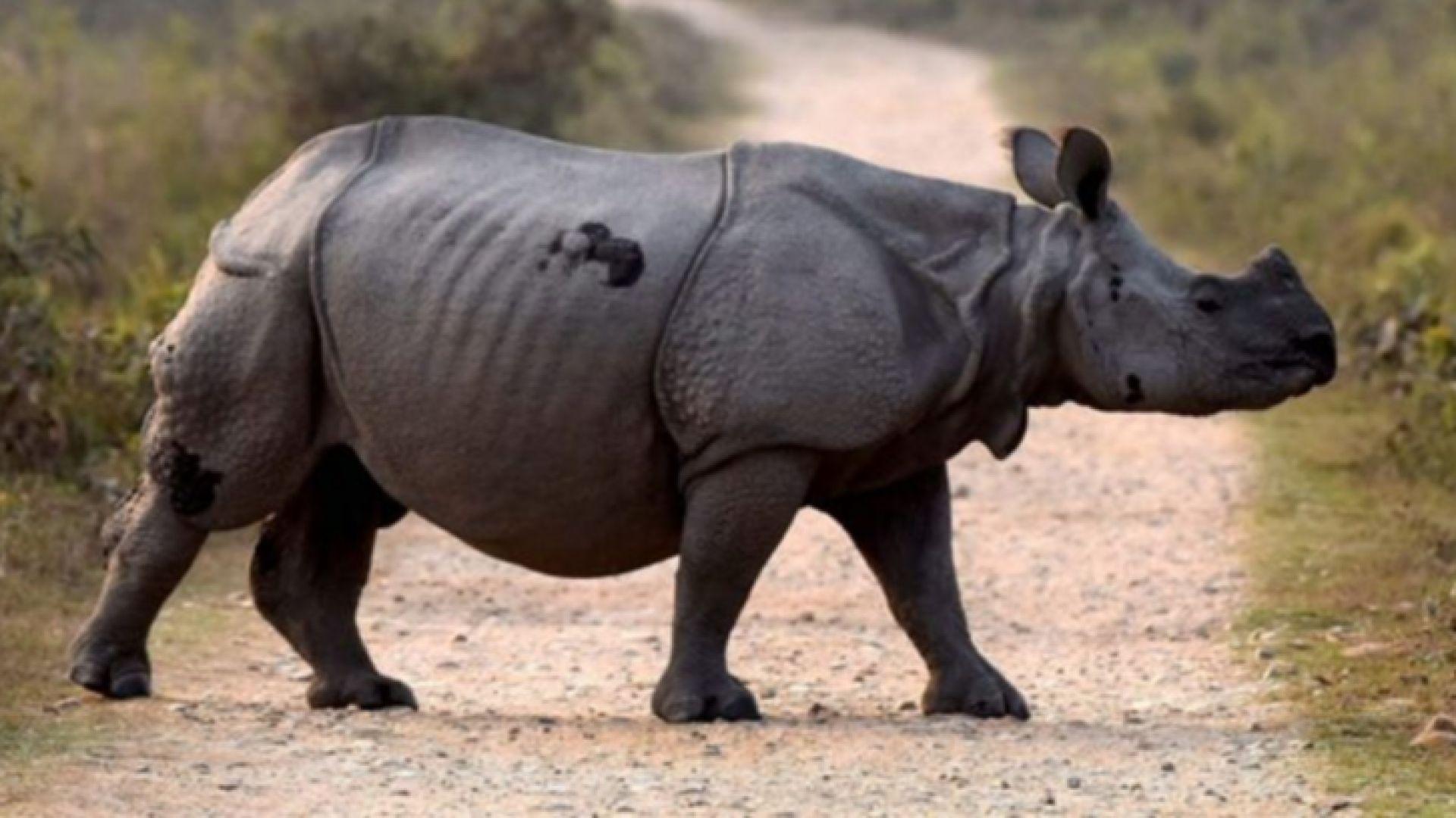 Суматранският носорог вече официално е изчезнал в Малайзия, със смъртта