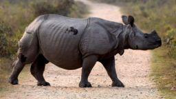 BBC: Умря последният суматрански носорог в Малайзия