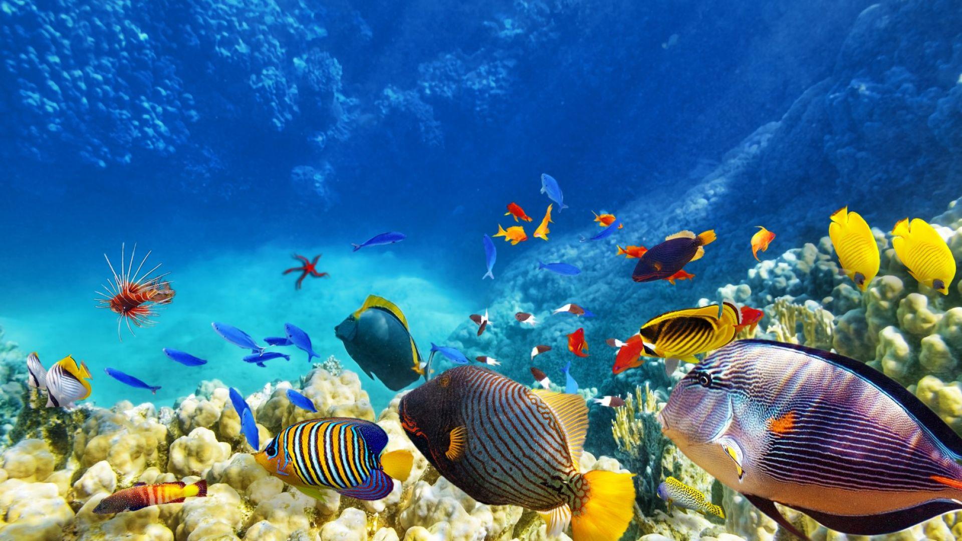 Половината корали на Големия бариерен риф  са загинали  от 1990 г. насам