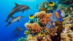Силните циклони могат  да увредят кораловите рифове  на голямо разстояние