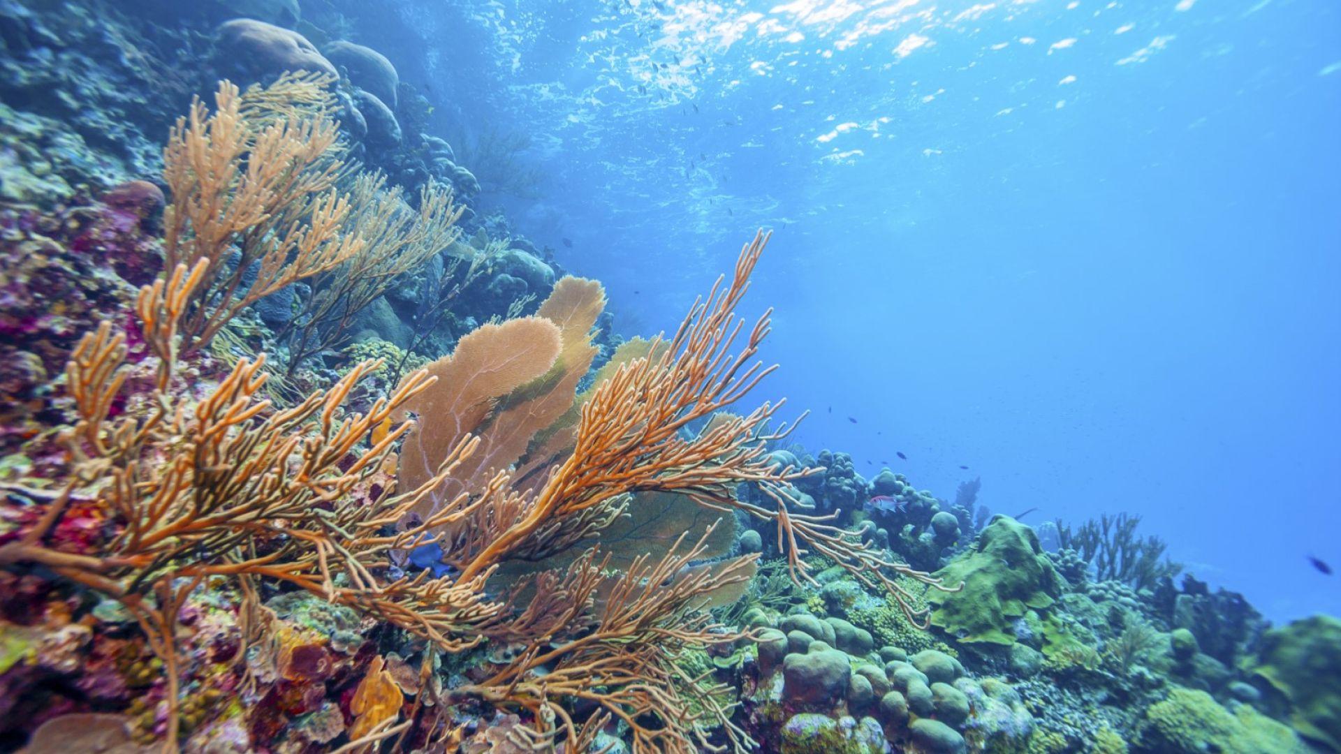 ГМО-корали ще оцелеят глобалното затопляне