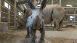 В зоопарк в Сан Диего се роди бял носорог